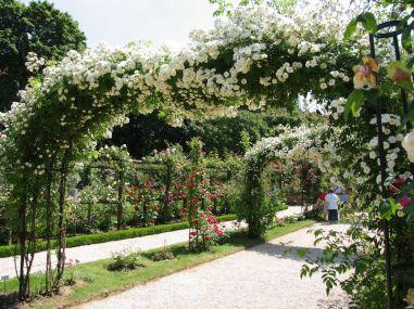 Parc de Bagatelle Paris rose arch. Photo Helen Young