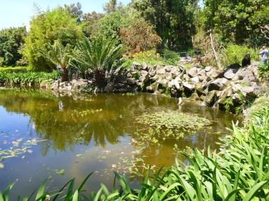 Pond in the garden at La Mortella, Ischia, Italy. Photo Angus Stewart