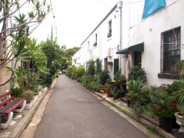 Sydney's 'Cat Alley' historic and plant-filled McElhone Place