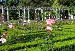 Rose Garden, Serralves Foundation, Porto © Marco Lima/Flickr