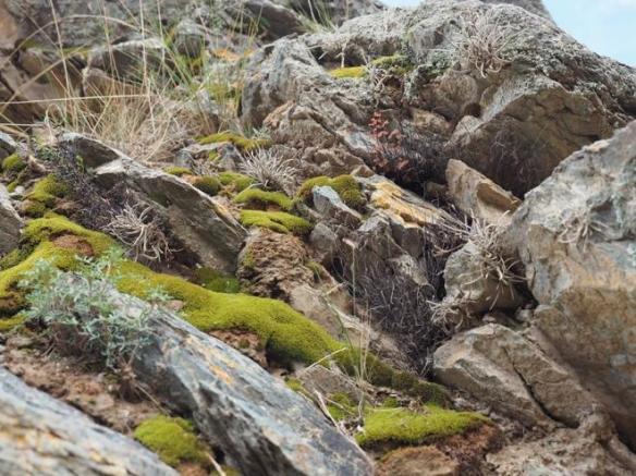 Mosses and lichens at Ollyantambo