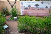 The Tswana 'Tshimo'Educational Garden. Designed by Chris van Niekerk, installation by NWU (North West University) Botanical Garden