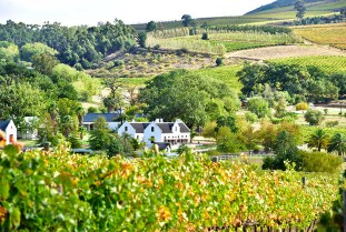 Stellenbosch Wine Route, Western Cape © South African Tourism
