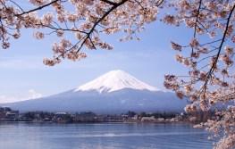 Lake Kawaguchiko, Sakura, Mount Fuji, Japan