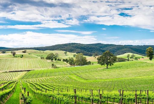 Picturesque wine valley in Barossa
