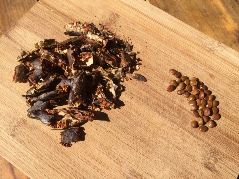 Carob pods & seeds
