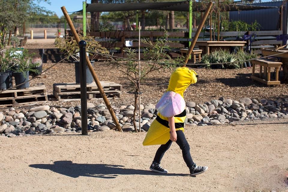 The 2nd Annual Arizona Honeybee Festival
