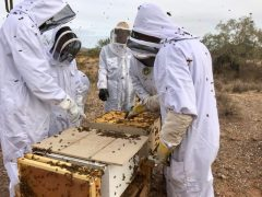 beekeeping outdoors