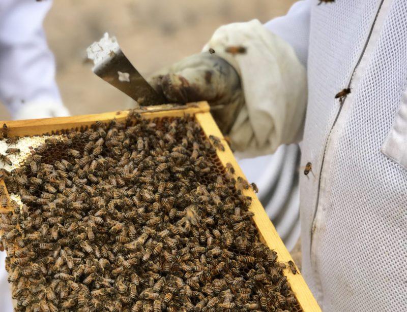 Hive Inspection Workshop