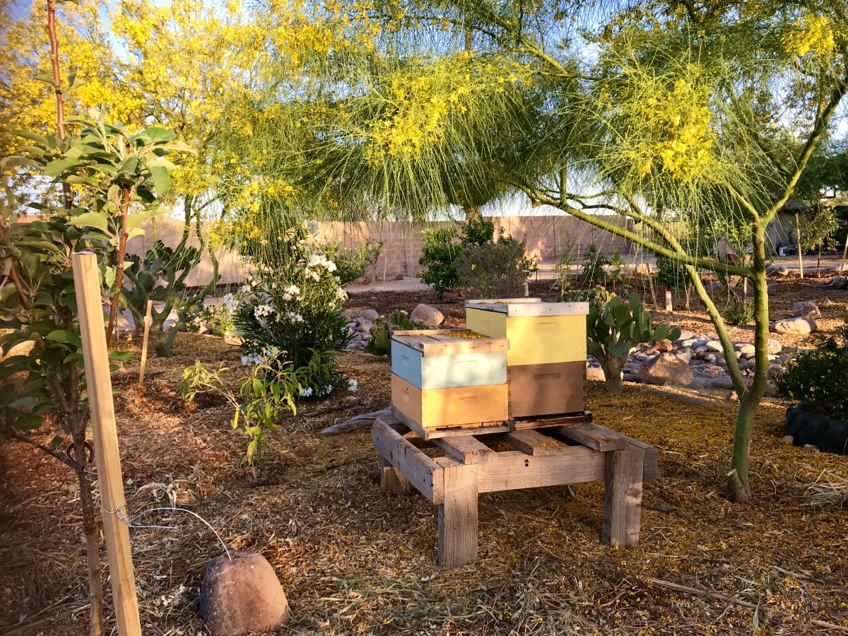 Creating a Bee-Friendly Low-Desert Garden