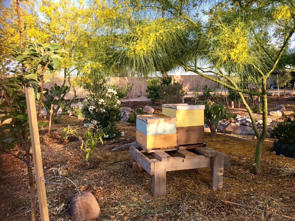 Creating a Bee-Friendly Low-Desert Garden