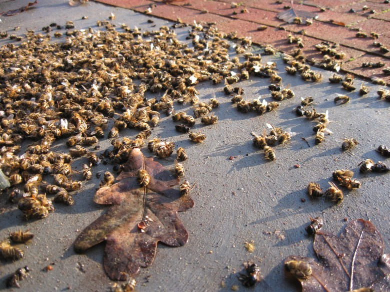 exterminated bees