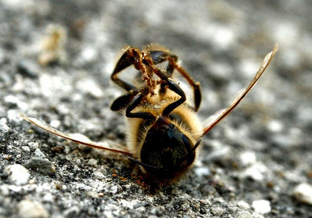 Pest Control vs. Bee Relocation