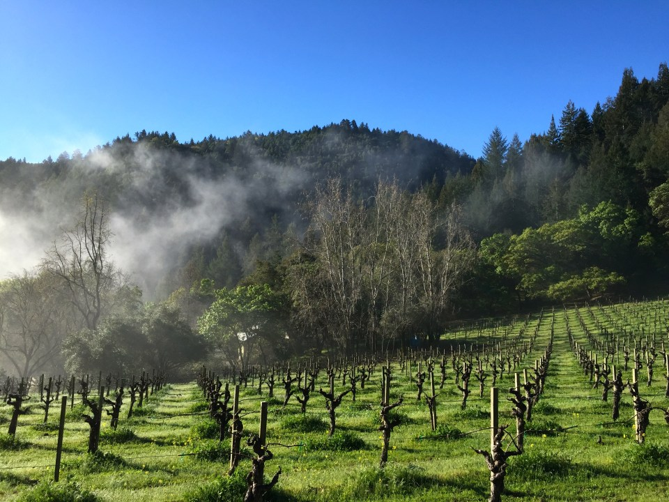 Sunny Stony Hill Vineyards. Photo: Alexander Rubin.