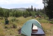 Horses in Camp