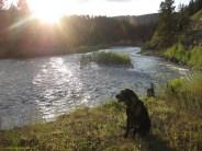 WD on Blackfoot