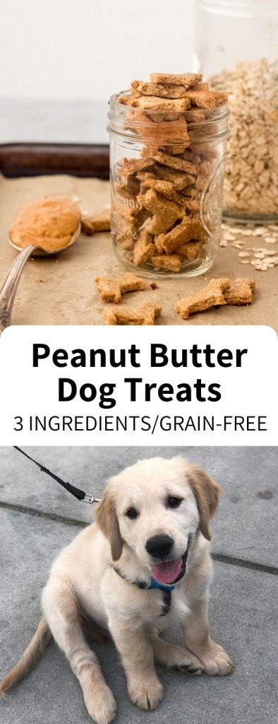Homemade Dog Treats made easy with just 3 ingredients, ready in 20 minutes! Wheat free and full of peanut butter, your dog or puppy will love these simple snacks.#dog #treat #puffin #homemade #puppy #dogtreat #grainfree #peanutbutter #easy #vegan #snack