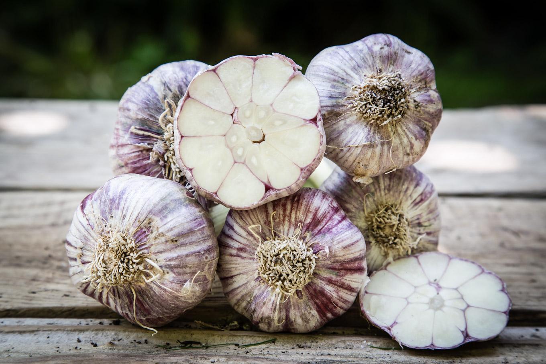 Purple Check Garlic Cut Open
