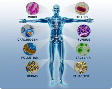 A visual representation of the human body's immune system.