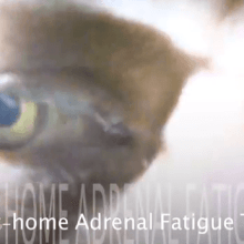 4 adrenal fatigue tests