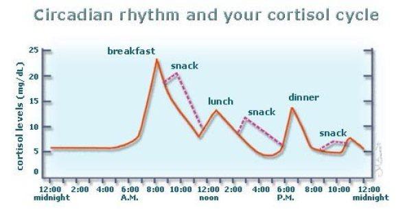 circadin-rhythms-and-cortisol-production
