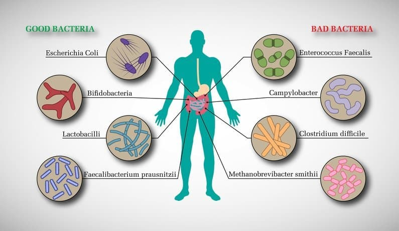 Good and Bad bacterial flora