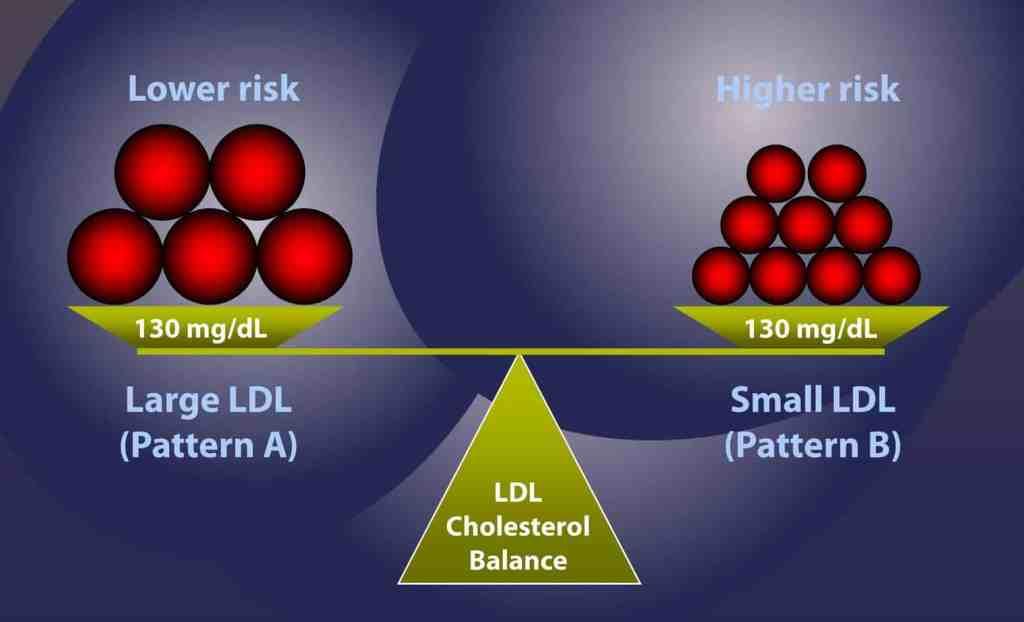 LDL particle size determines heart disease risk.
