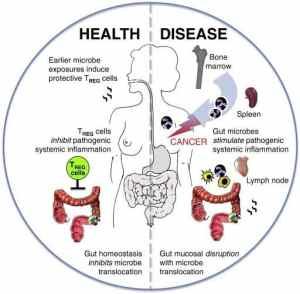 gut bacteria benefits