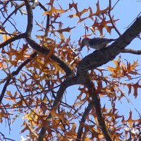Guest Post:  It's for the birds...