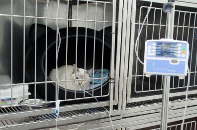 Internamento Gatil - Garra Hospital Veterinário