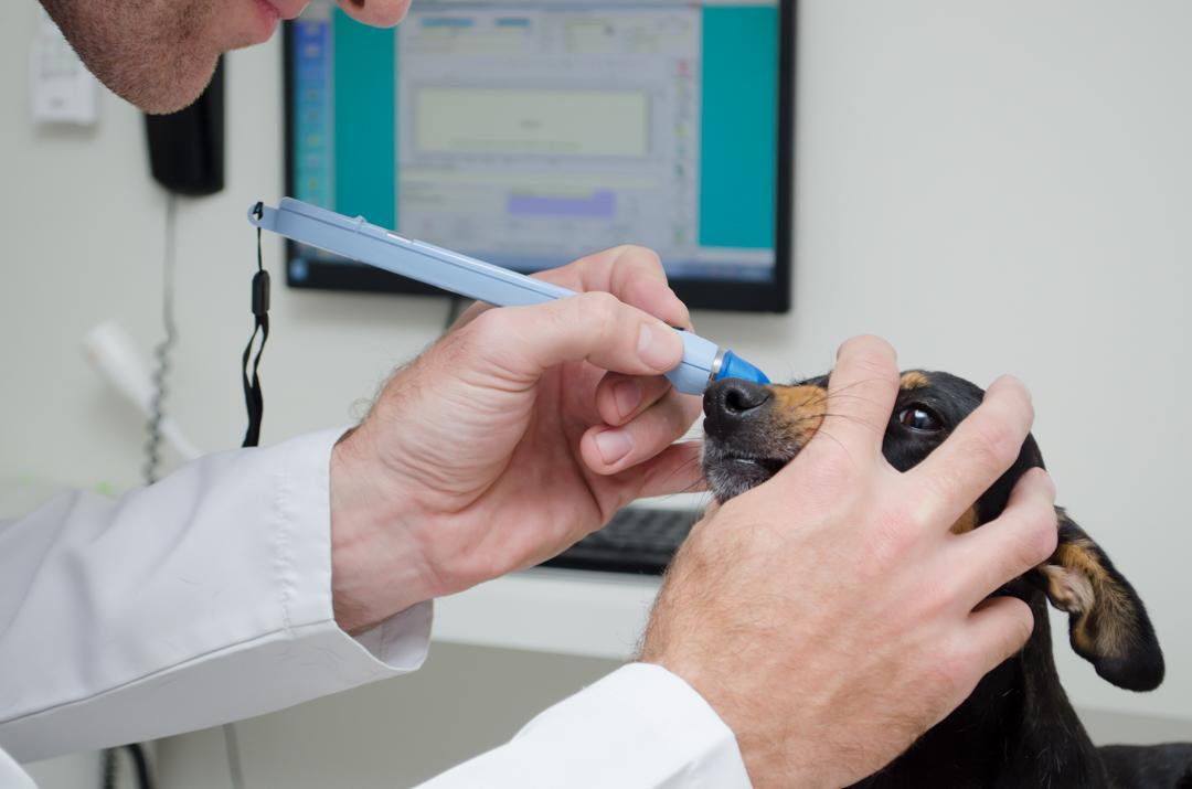 Oftalmologia - Garra Hospital Veterinario
