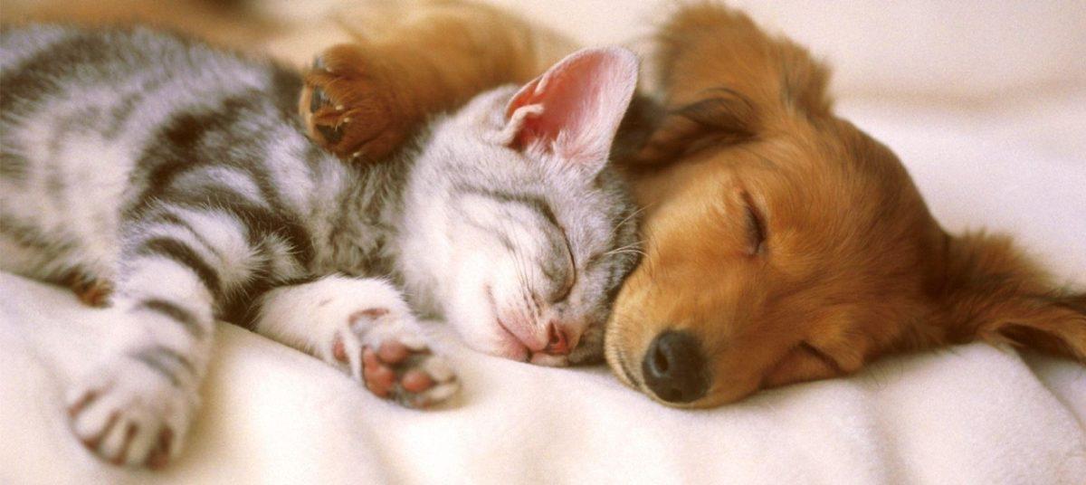 seguros proteccion de mascotas