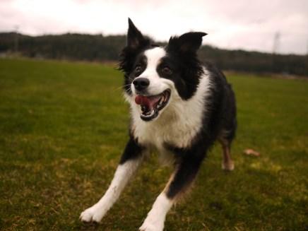 Crazy Happy Mickey Dog