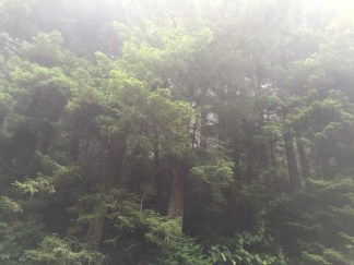 Mysteries of the Redwoods