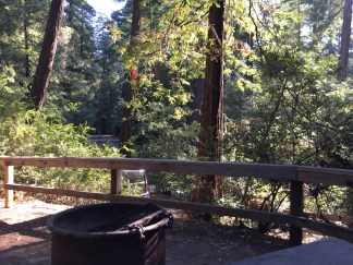 Car Camping the Redwoods
