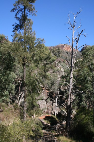 Wambelong Nature Trail, Warrumbungle Ranges (22)