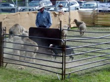 Sheep Dog Trials Walcha Agricultural Show
