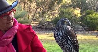Raptor Domain Birds of Prey Kangaroo Island 6 June 2016 (61)
