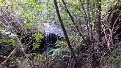 Fitzroy Falls 21 April 2017 Bushwalk with Grandchildren (9) (1024x576)