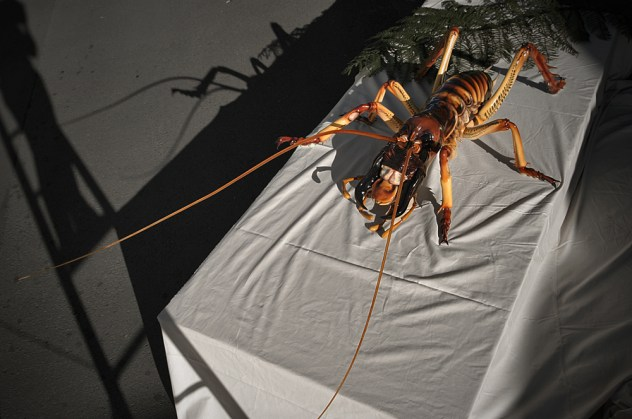 A giant scale common weta for the Franz Josef Glacier visitors centre [fibreglass]