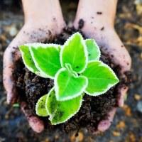 Regenerative Farming...