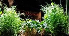 Kräuter im Blumenkasten pflanzen