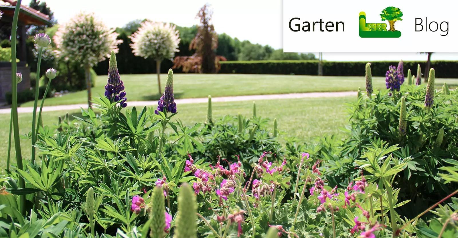 Blühender Frühling. Herzlich Willkommen - Garten Leber