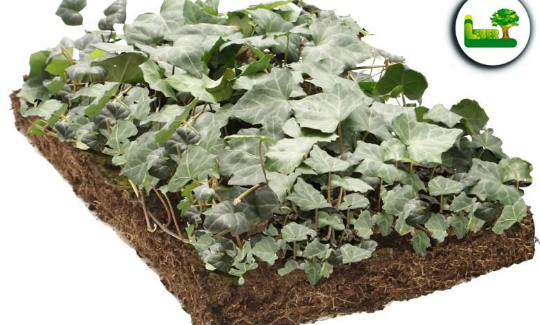 Bodendeckermatte von Covergreen®