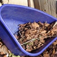 Trockenes Laub spart Wasser ?