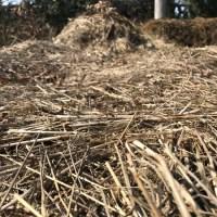 Bio Roundup 2017 - die Bilanz