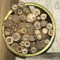Mauerbienen-Brutröhren aus Pappe