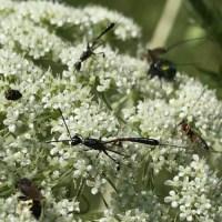 Möhren für die Wildbienen