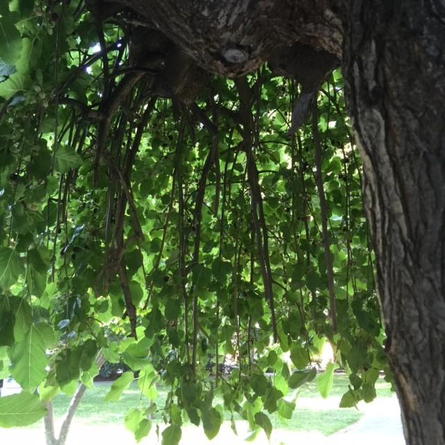 Bäume Für Kleine Gärten bäume für kleine gärten gartenakademie