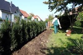 ga-pflanzung taxus